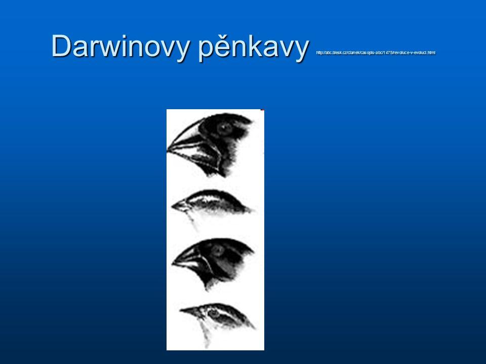 Darwinovy pěnkavy http://abc.blesk.cz/clanek/casopis-abc/1475/revoluce-v-evoluci.html
