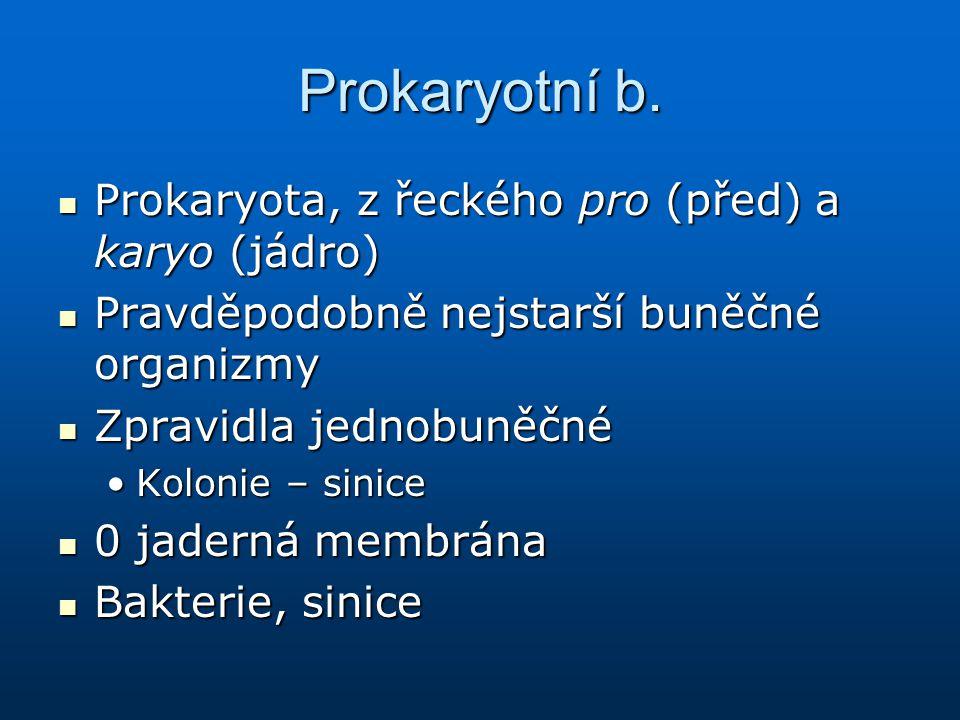 Prokaryotní b. Prokaryota, z řeckého pro (před) a karyo (jádro) Prokaryota, z řeckého pro (před) a karyo (jádro) Pravděpodobně nejstarší buněčné organ