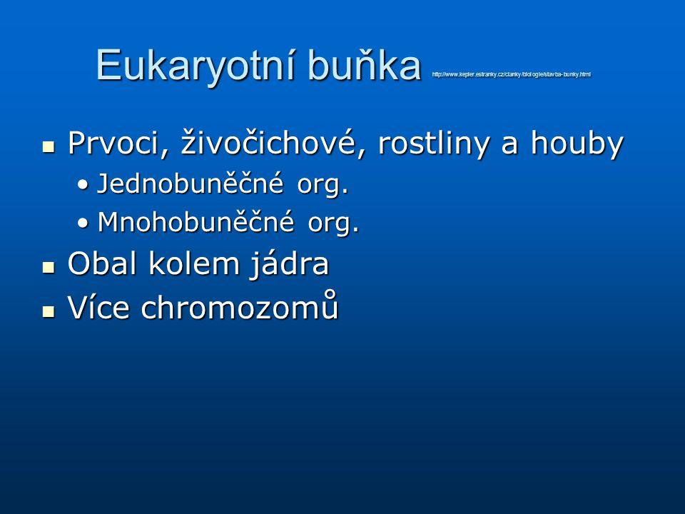 Eukaryotní buňka http://www.kepler.estranky.cz/clanky/biologie/stavba-bunky.html Prvoci, živočichové, rostliny a houby Prvoci, živočichové, rostliny a