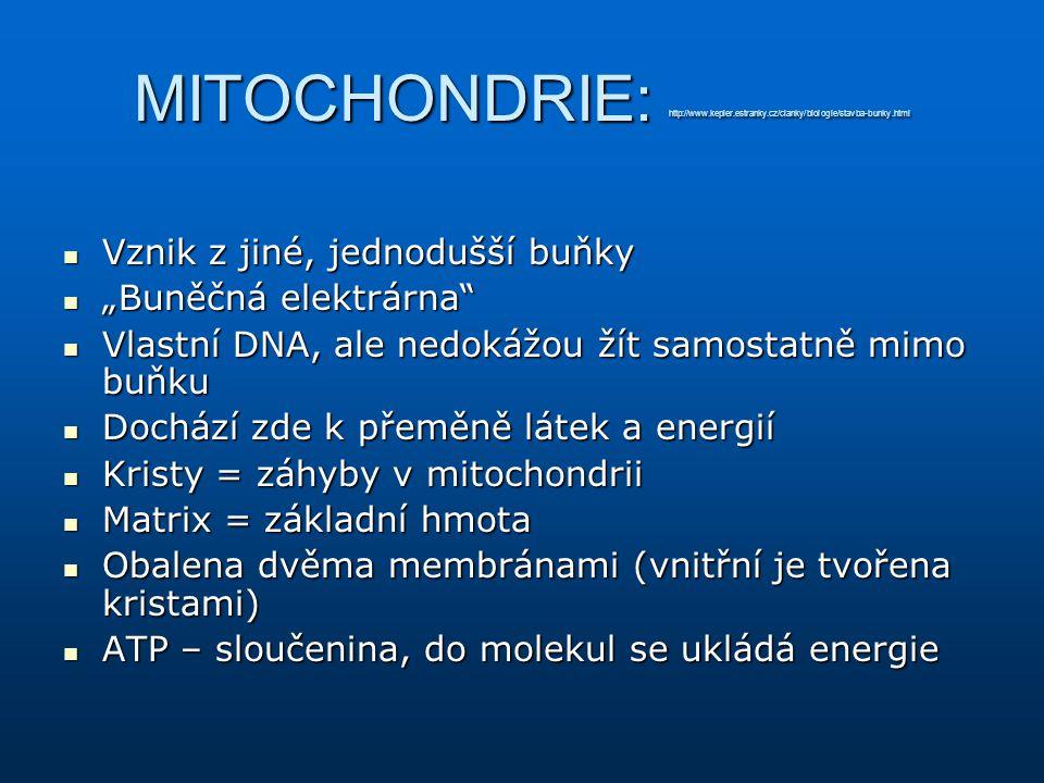 """MITOCHONDRIE: http://www.kepler.estranky.cz/clanky/biologie/stavba-bunky.html Vznik z jiné, jednodušší buňky Vznik z jiné, jednodušší buňky """"Buněčná e"""