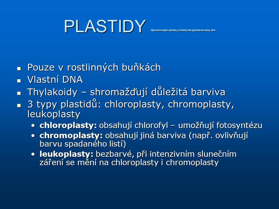 PLASTIDY http://www.kepler.estranky.cz/clanky/biologie/stavba-bunky.html Pouze v rostlinných buňkách Pouze v rostlinných buňkách Vlastní DNA Vlastní D