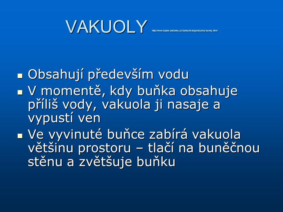 VAKUOLY http://www.kepler.estranky.cz/clanky/biologie/stavba-bunky.html Obsahují především vodu Obsahují především vodu V momentě, kdy buňka obsahuje