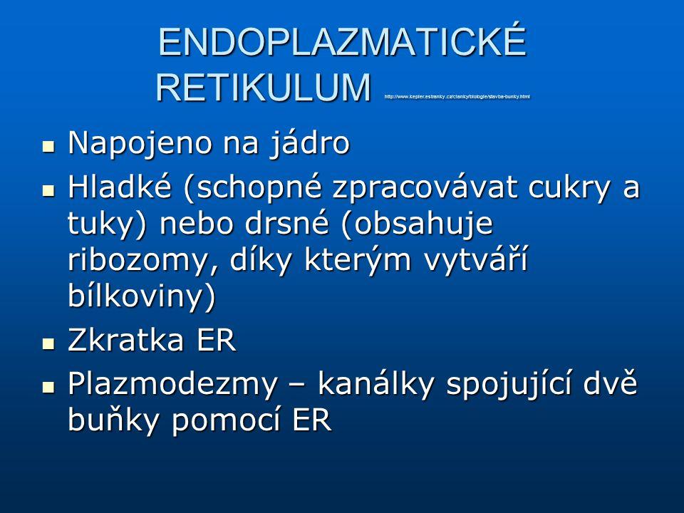 ENDOPLAZMATICKÉ RETIKULUM http://www.kepler.estranky.cz/clanky/biologie/stavba-bunky.html Napojeno na jádro Napojeno na jádro Hladké (schopné zpracová