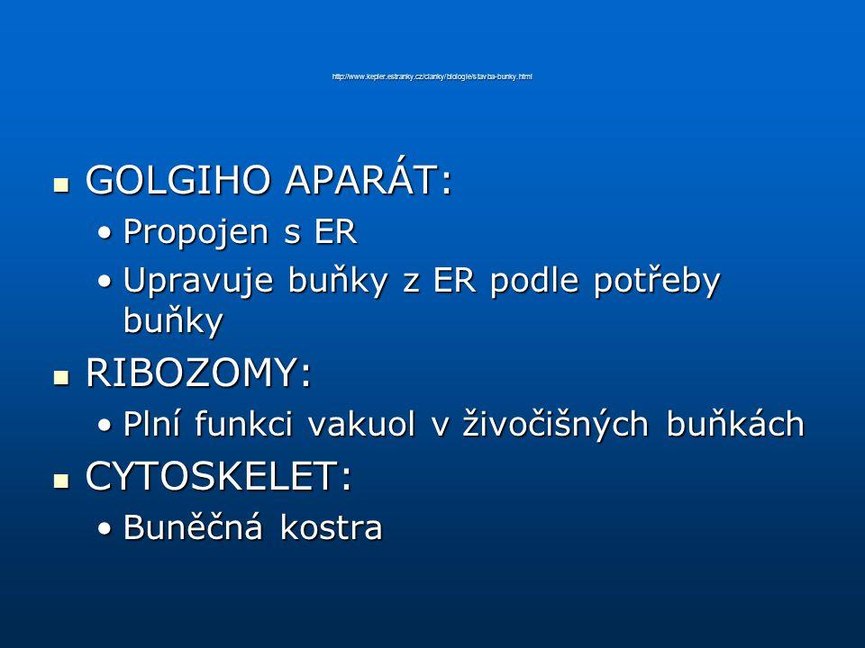 http://www.kepler.estranky.cz/clanky/biologie/stavba-bunky.html GOLGIHO APARÁT: GOLGIHO APARÁT: Propojen s ERPropojen s ER Upravuje buňky z ER podle p