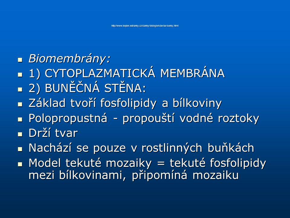 http://www.kepler.estranky.cz/clanky/biologie/stavba-bunky.html Biomembrány: Biomembrány: 1) CYTOPLAZMATICKÁ MEMBRÁNA 1) CYTOPLAZMATICKÁ MEMBRÁNA 2) B