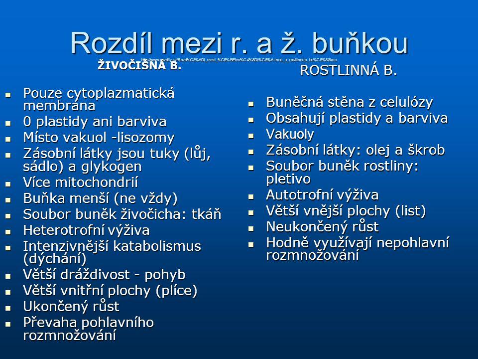 Rozdíl mezi r. a ž. buňkou http://www.rozdily.cz/Rozd%C3%ADl_mezi_%C5%BEivo%C4%8Di%C5%A1nou_a_rostlinnou_bu%C5%88kou ŽIVOČIŠNÁ B. Pouze cytoplazmatick
