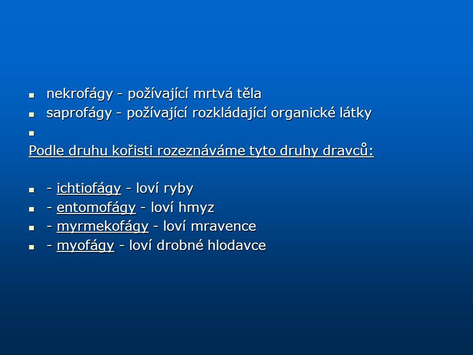 nekrofágy - požívající mrtvá těla nekrofágy - požívající mrtvá těla saprofágy - požívající rozkládající organické látky saprofágy - požívající rozklád