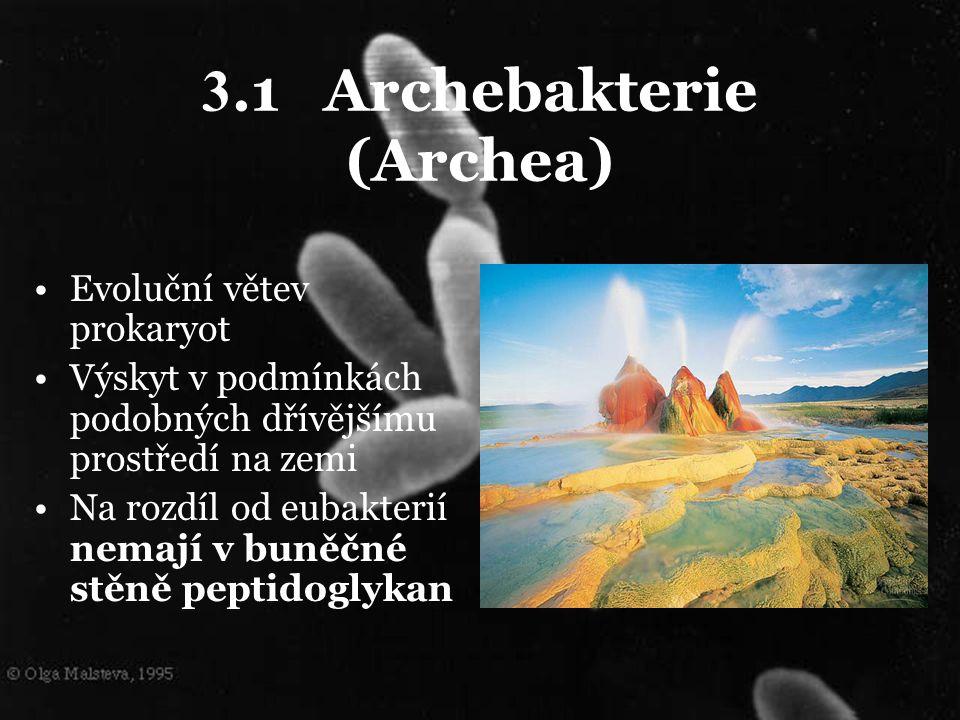 3.1 Archebakterie (Archea) Evoluční větev prokaryot Výskyt v podmínkách podobných dřívějšímu prostředí na zemi Na rozdíl od eubakterií nemají v buněčn