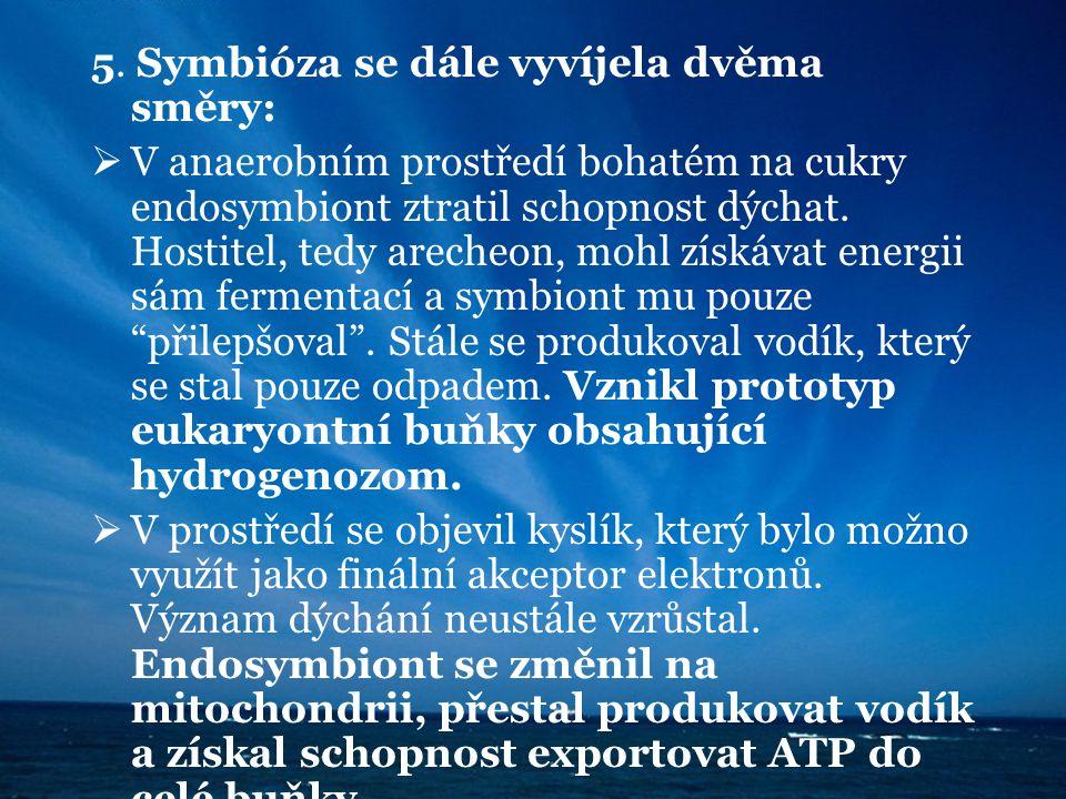 5. Symbióza se dále vyvíjela dvěma směry:  V anaerobním prostředí bohatém na cukry endosymbiont ztratil schopnost dýchat. Hostitel, tedy arecheon, mo