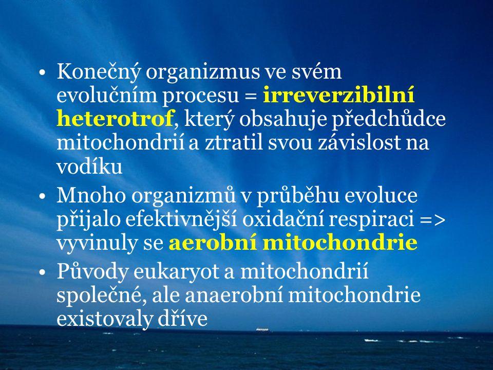 Konečný organizmus ve svém evolučním procesu = irreverzibilní heterotrof, který obsahuje předchůdce mitochondrií a ztratil svou závislost na vodíku Mn