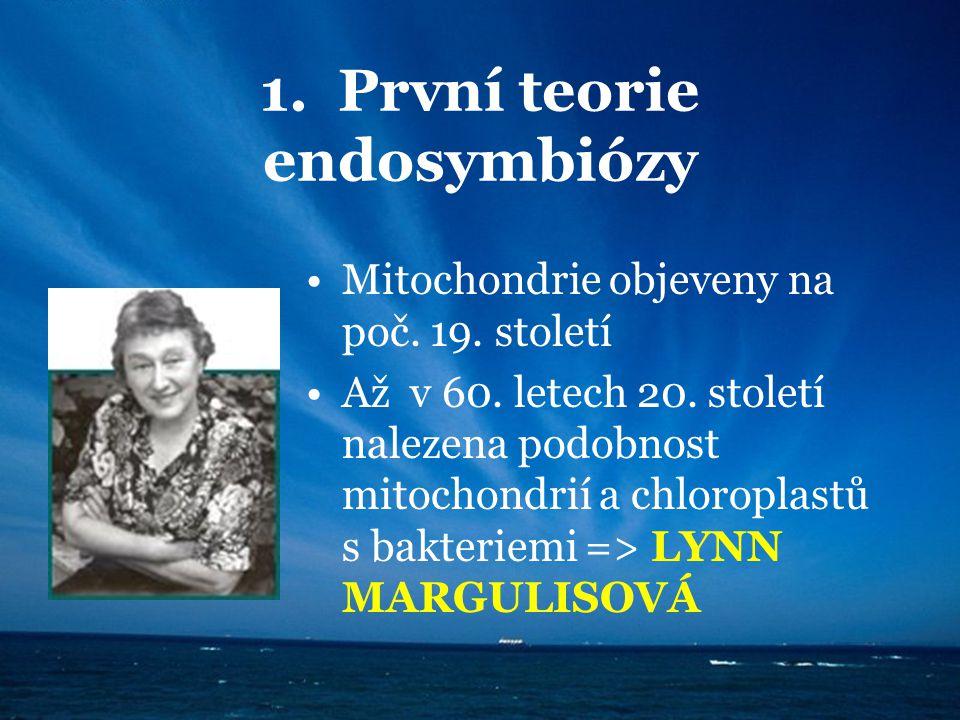 1. První teorie endosymbiózy Mitochondrie objeveny na poč. 19. století Až v 60. letech 20. století nalezena podobnost mitochondrií a chloroplastů s ba