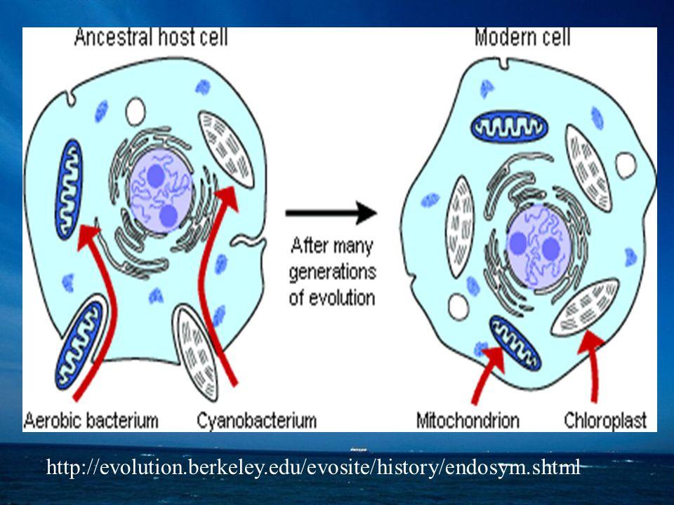   i  proteobakterie = chemoautotrofní a chemoheterotrofní,  se nacházejí v půdě a vodě a některé jsou patogenní   proteobakterie  zahrnují čeledě Enterobacteriaceae, Pseudomonas, Legionellas, Vibrionales, Pasterurellas   – proteobakterie – zahrnují čeledě Myxococcus, Bdellovibrio a Desulfovibrio