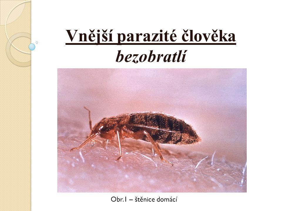 Vnější parazité člověka bezobratlí Obr.1 – štěnice domácí