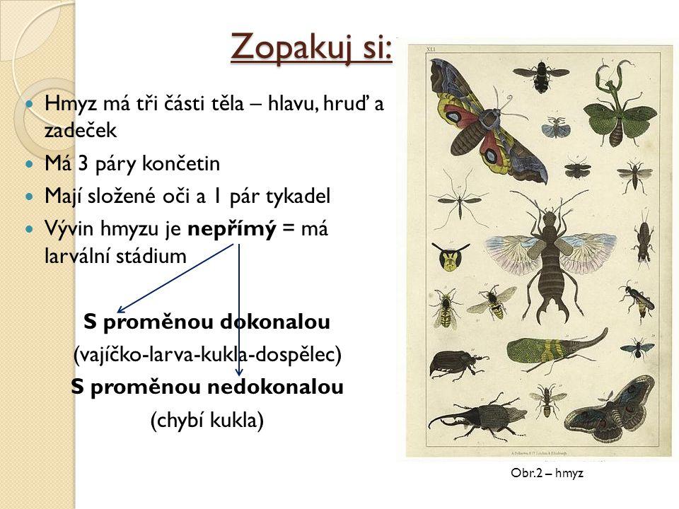 Zopakuj si: Hmyz má tři části těla – hlavu, hruď a zadeček Má 3 páry končetin Mají složené oči a 1 pár tykadel Vývin hmyzu je nepřímý = má larvální st