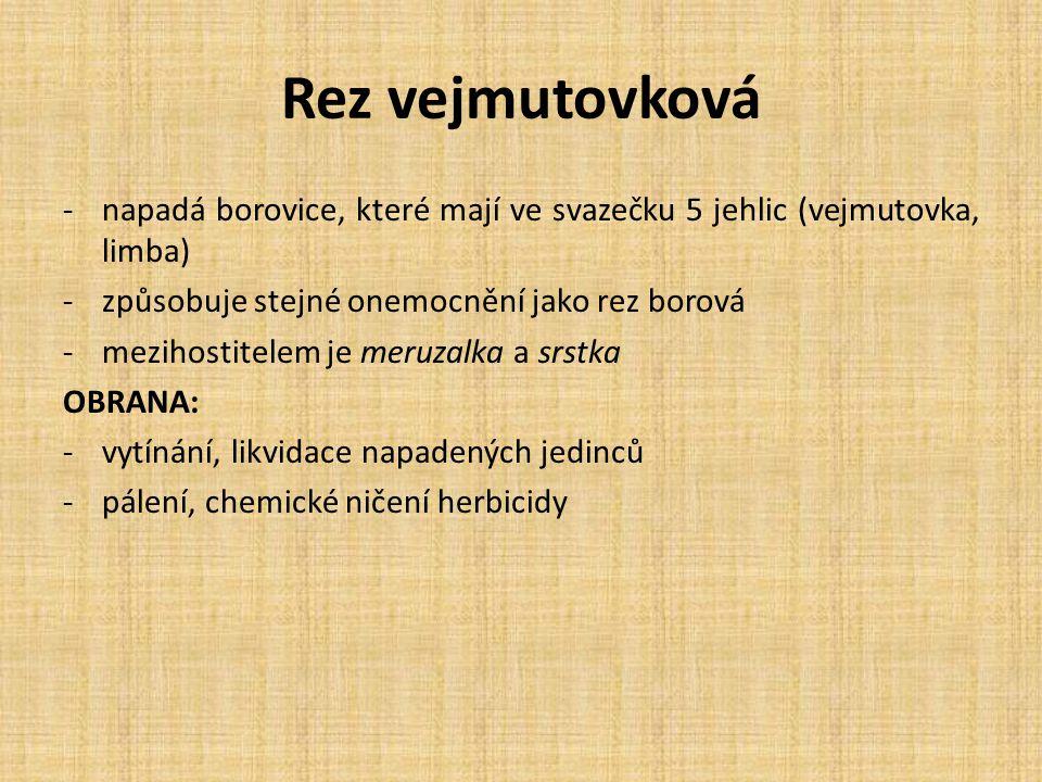 Rez vejmutovková -napadá borovice, které mají ve svazečku 5 jehlic (vejmutovka, limba) -způsobuje stejné onemocnění jako rez borová -mezihostitelem je