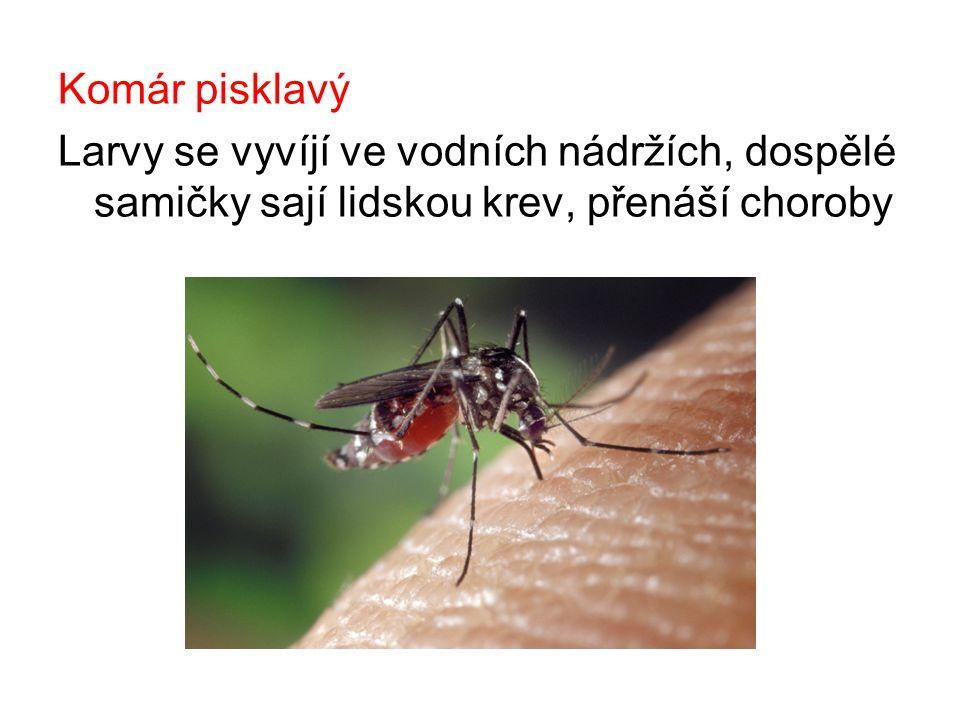 Komár pisklavý Larvy se vyvíjí ve vodních nádržích, dospělé samičky sají lidskou krev, přenáší choroby