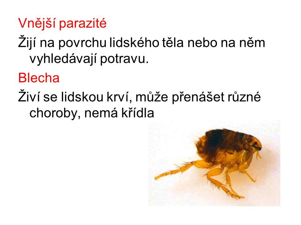 Vnější parazité Žijí na povrchu lidského těla nebo na něm vyhledávají potravu.