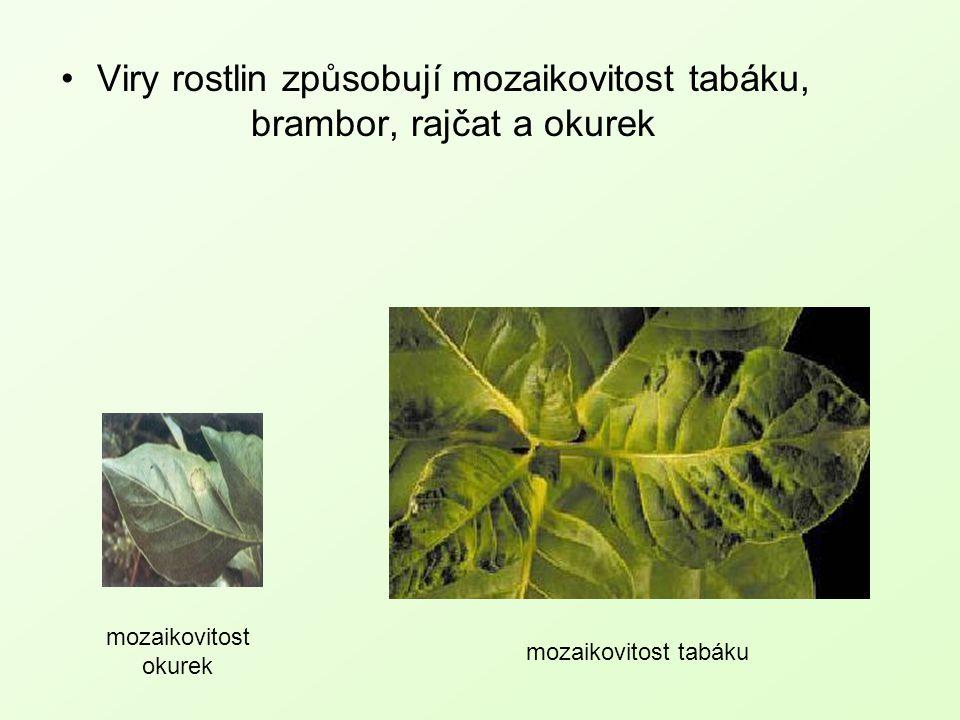 Viry rostlin způsobují mozaikovitost tabáku, brambor, rajčat a okurek mozaikovitost okurek mozaikovitost tabáku