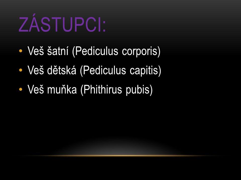 ZÁSTUPCI: Veš šatní (Pediculus corporis) Veš dětská (Pediculus capitis) Veš muňka (Phithirus pubis)