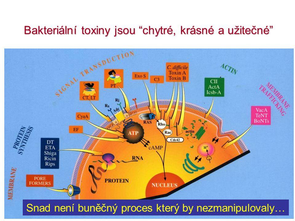 Snad není buněčný proces který by nezmanipulovaly… Bakteriální toxiny jsou chytré, krásné a užitečné