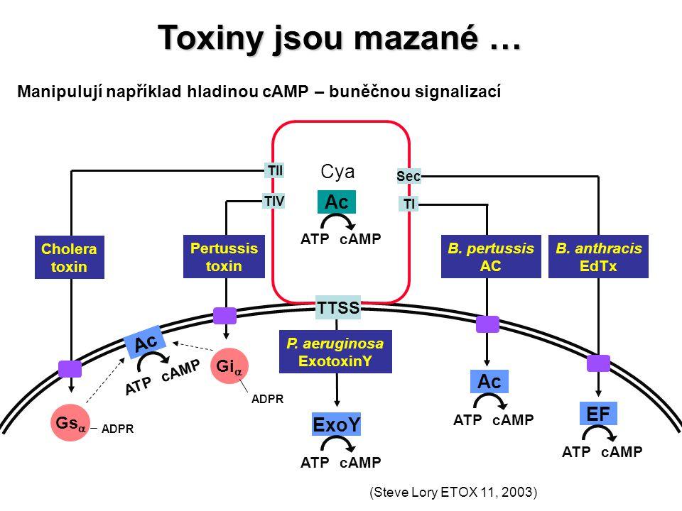 Manipulují například hladinou cAMP – buněčnou signalizací Ac ATPcAMP Cya Ac ATP cAMP ExoY ATPcAMP TTSS P. aeruginosa ExotoxinY B. anthracis EdTx Chole
