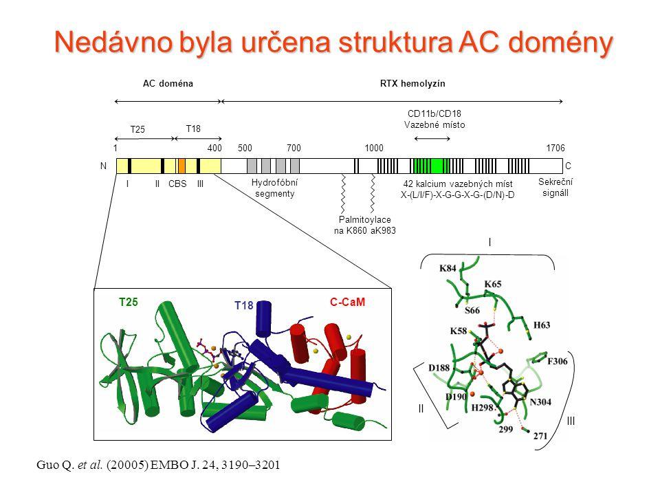 AC doménaRTX hemolyzín 1 400 500 7001000 1706 Hydrofóbní segmenty I IIIII CBS Palmitoylace na K860 aK983 Sekreční signáll NC 42 kalcium vazebných míst X-(L/I/F)-X-G-G-X-G-(D/N)-D T25 T18 CD11b/CD18 Vazebné místo I II III Nedávno byla určena struktura AC domény C-CaM T18 T25 Guo Q.