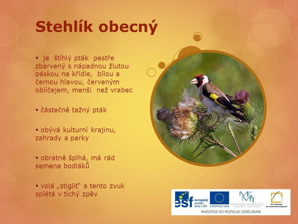 Stehlík obecný  je štíhlý pták pestře zbarvený s nápadnou žlutou páskou na křídle, bílou a černou hlavou, červeným obličejem, menší než vrabec  část