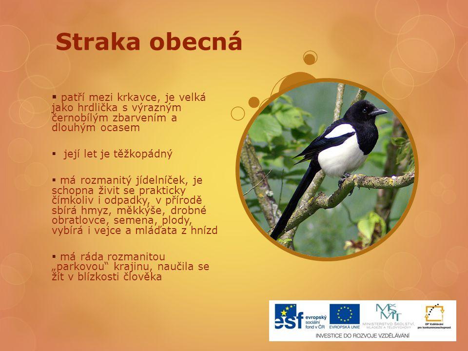 Straka obecná  patří mezi krkavce, je velká jako hrdlička s výrazným černobílým zbarvením a dlouhým ocasem  její let je těžkopádný  má rozmanitý jí