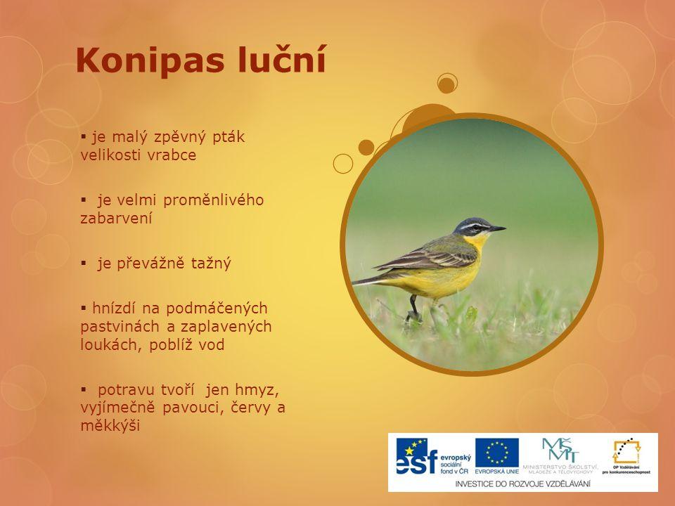 Konipas luční  je malý zpěvný pták velikosti vrabce  je velmi proměnlivého zabarvení  je převážně tažný  hnízdí na podmáčených pastvinách a zaplav
