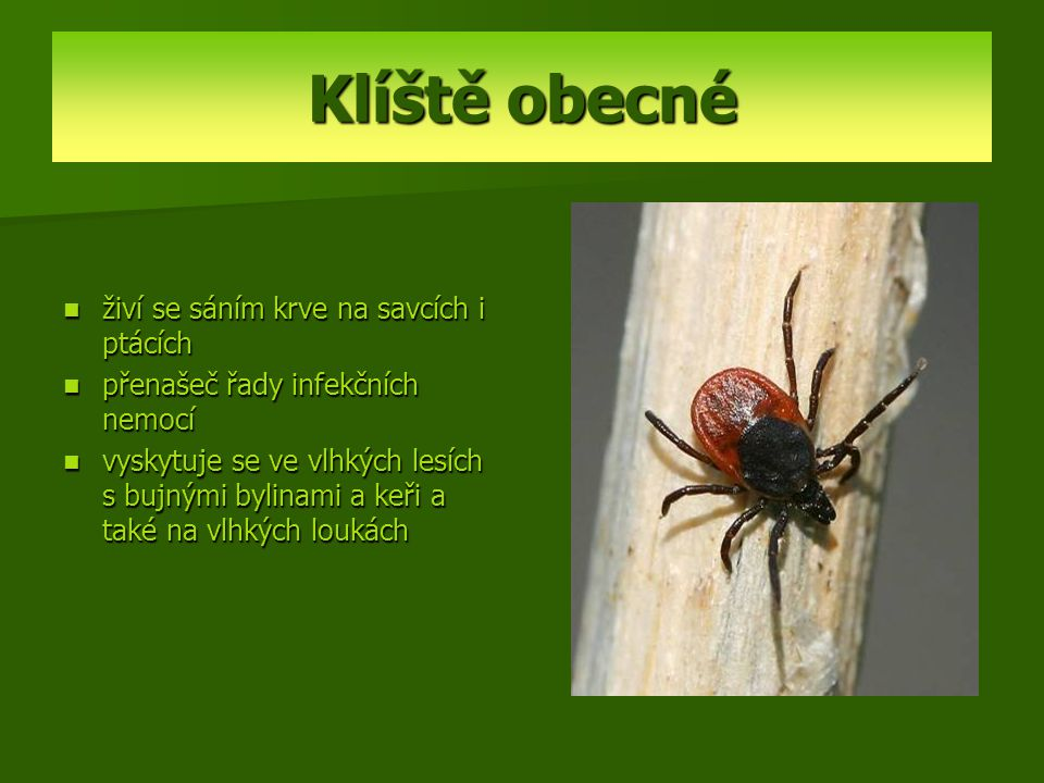Klíště obecné živí se sáním krve na savcích i ptácích přenašeč řady infekčních nemocí vyskytuje se ve vlhkých lesích s bujnými bylinami a keři a také