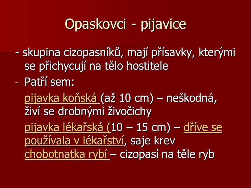 Opaskovci - pijavice - skupina cizopasníků, mají přísavky, kterými se přichycují na tělo hostitele - Patří sem: pijavka koňská (až 10 cm) – neškodná, živí se drobnými živočichy pijavka koňská (až 10 cm) – neškodná, živí se drobnými živočichypijavka koňská pijavka koňská pijavka lékařská (10 – 15 cm) – dříve se používala v lékařství, saje krev chobotnatka rybí – cizopasí na těle ryb pijavka lékařská (10 – 15 cm) – dříve se používala v lékařství, saje krev chobotnatka rybí – cizopasí na těle rybpijavka lékařská (dříve se používala v lékařství chobotnatka rybí pijavka lékařská (dříve se používala v lékařství chobotnatka rybí
