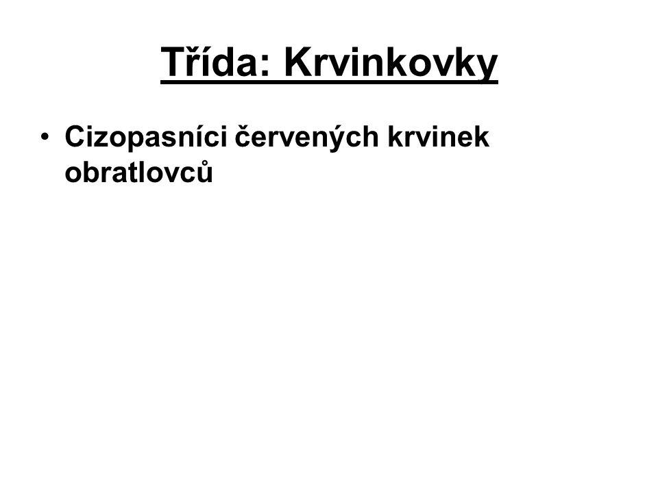 Třída: Krvinkovky Cizopasníci červených krvinek obratlovců