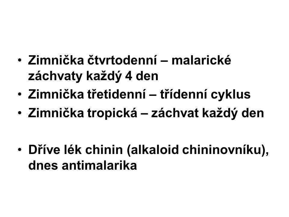 Zimnička čtvrtodenní – malarické záchvaty každý 4 den Zimnička třetidenní – třídenní cyklus Zimnička tropická – záchvat každý den Dříve lék chinin (al