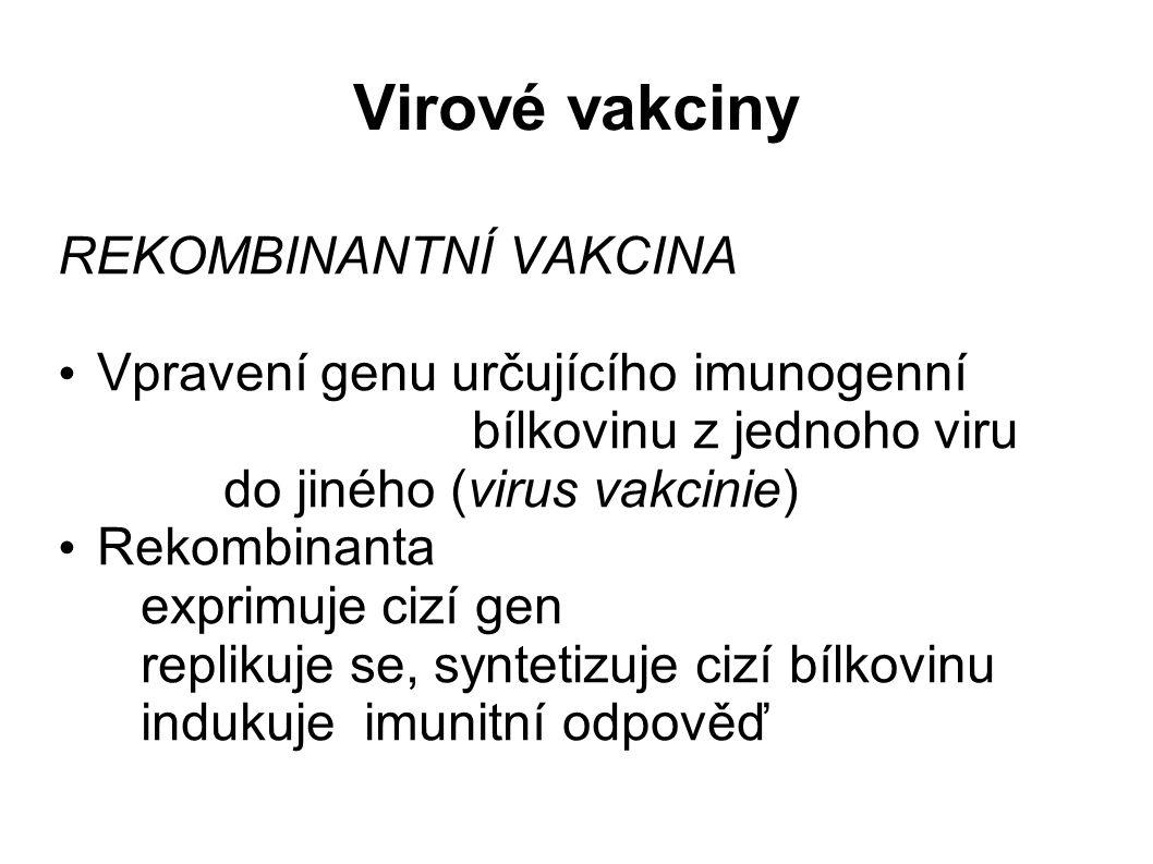 Virové vakciny REKOMBINANTNÍ VAKCINA Vpravení genu určujícího imunogenní bílkovinu z jednoho viru do jiného (virus vakcinie) Rekombinanta exprimuje cizí gen replikuje se, syntetizuje cizí bílkovinu indukuje imunitní odpověď