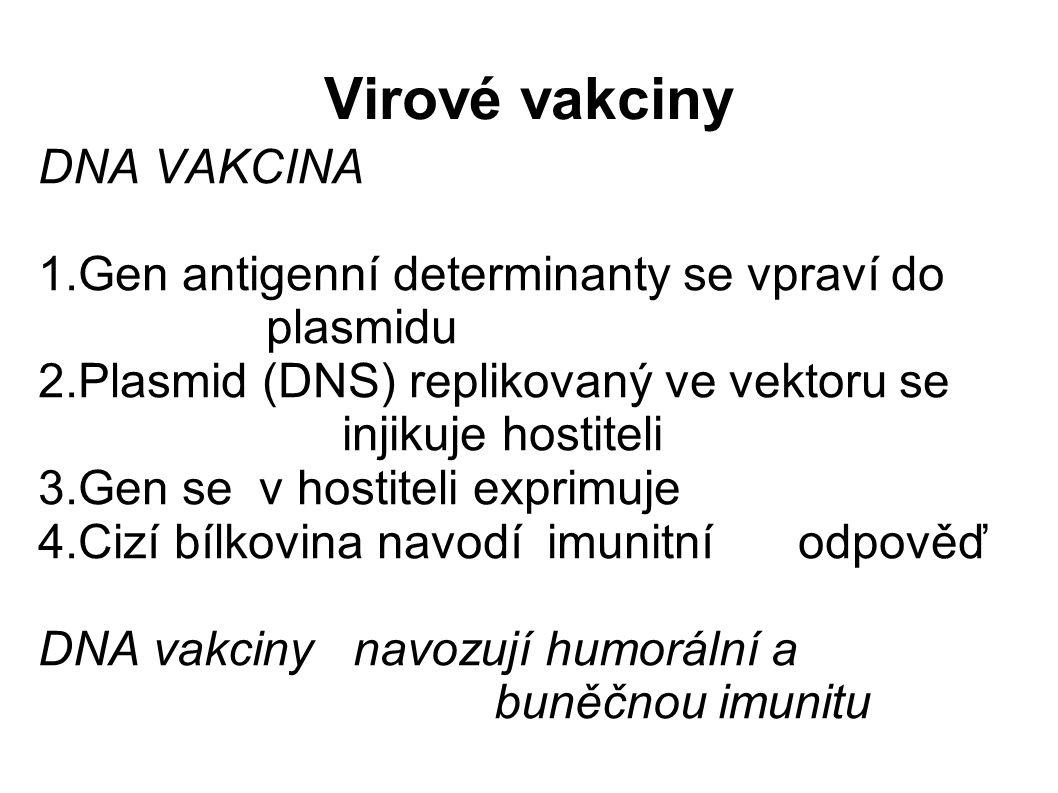 Virové vakciny DNA VAKCINA 1.Gen antigenní determinanty se vpraví do plasmidu 2.Plasmid (DNS) replikovaný ve vektoru se injikuje hostiteli 3.Gen se v hostiteli exprimuje 4.Cizí bílkovina navodí imunitní odpověď DNA vakciny navozují humorální a buněčnou imunitu