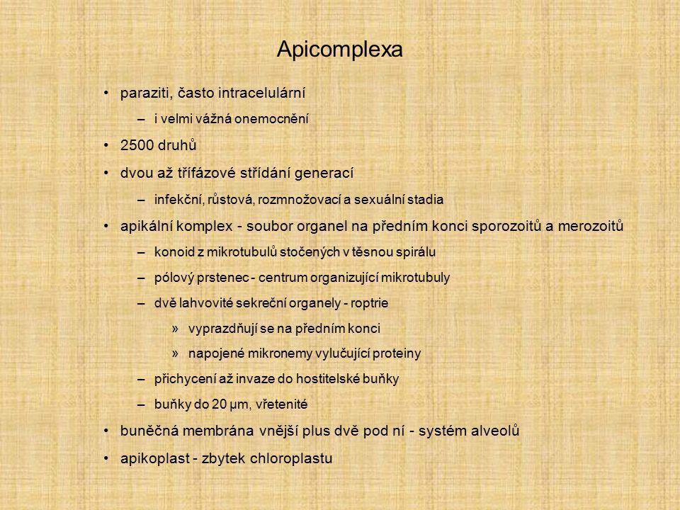 Apicomplexa paraziti, často intracelulární –i velmi vážná onemocnění 2500 druhů dvou až třífázové střídání generací –infekční, růstová, rozmnožovací a