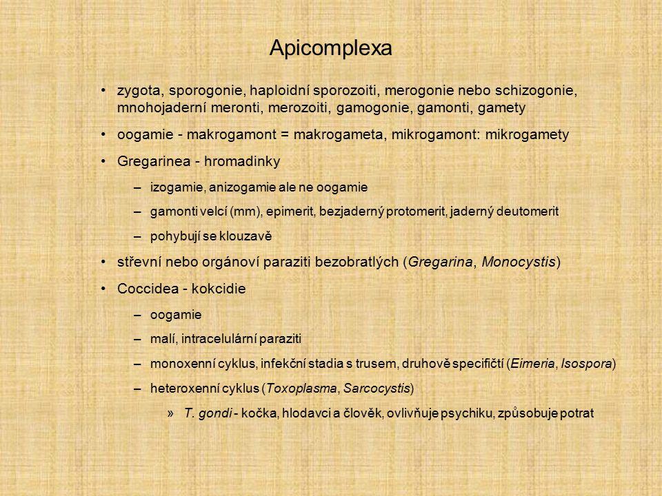 Apicomplexa zygota, sporogonie, haploidní sporozoiti, merogonie nebo schizogonie, mnohojaderní meronti, merozoiti, gamogonie, gamonti, gamety oogamie