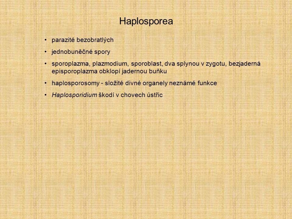 Haplosporea parazité bezobratlých jednobuněčné spory sporoplazma, plazmodium, sporoblast, dva splynou v zygotu, bezjaderná episporoplazma obklopí jade