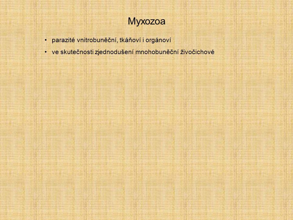 Myxozoa parazité vnitrobuněční, tkáňoví i orgánoví ve skutečnosti zjednodušení mnohobuněční živočichové