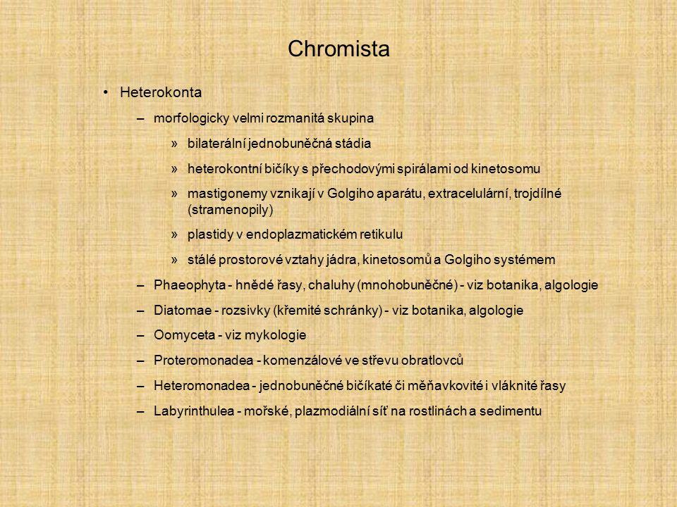 Chromista Heterokonta –morfologicky velmi rozmanitá skupina »bilaterální jednobuněčná stádia »heterokontní bičíky s přechodovými spirálami od kinetoso