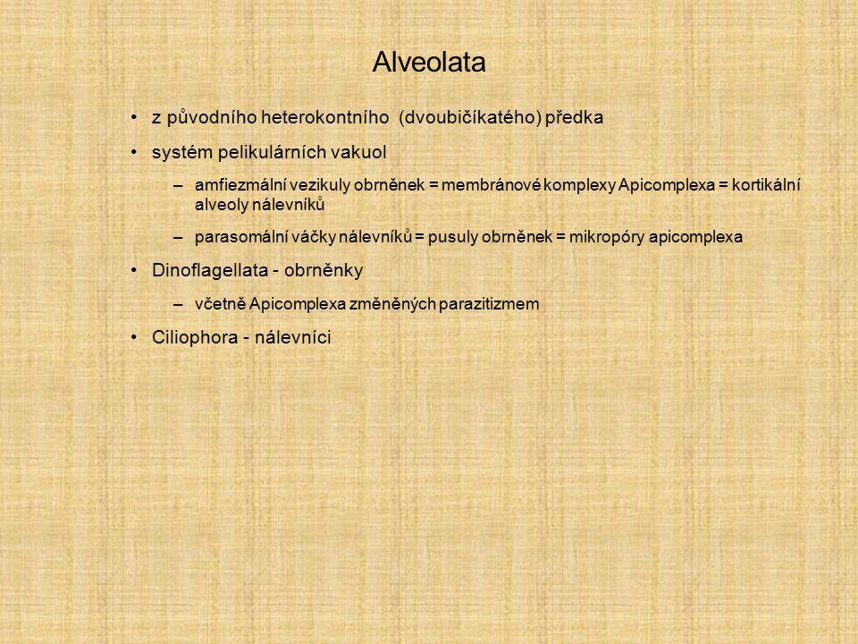 Alveolata z původního heterokontního (dvoubičíkatého) předka systém pelikulárních vakuol –amfiezmální vezikuly obrněnek = membránové komplexy Apicompl