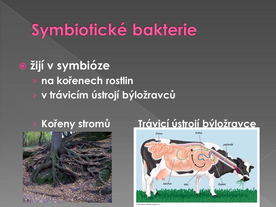  žijí v symbióze › na kořenech rostlin › v trávicím ústrojí býložravců › Kořeny stromů Trávicí ústrojí býložravce