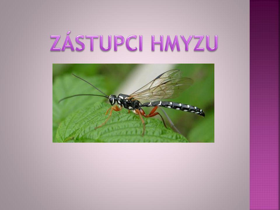 samička sameček larva