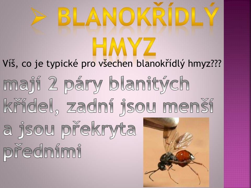 Víš, co je typické pro všechen blanokřídlý hmyz???