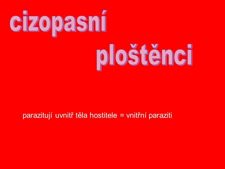 parazitují uvnitř těla hostitele = vnitřní paraziti