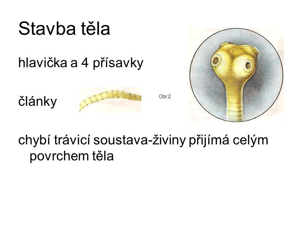 Stavba těla hlavička a 4 přísavky články chybí trávicí soustava-živiny přijímá celým povrchem těla Obr.2.