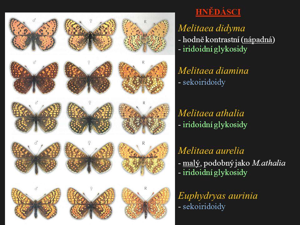 Melitaea didyma - hodně kontrastní (nápadná) - iridoidní glykosidy Melitaea diamina - sekoiridoidy Melitaea athalia - iridoidní glykosidy Melitaea aurelia - malý, podobný jako M.athalia - iridoidní glykosidy Euphydryas aurinia - sekoiridoidy HNĚDÁSCI