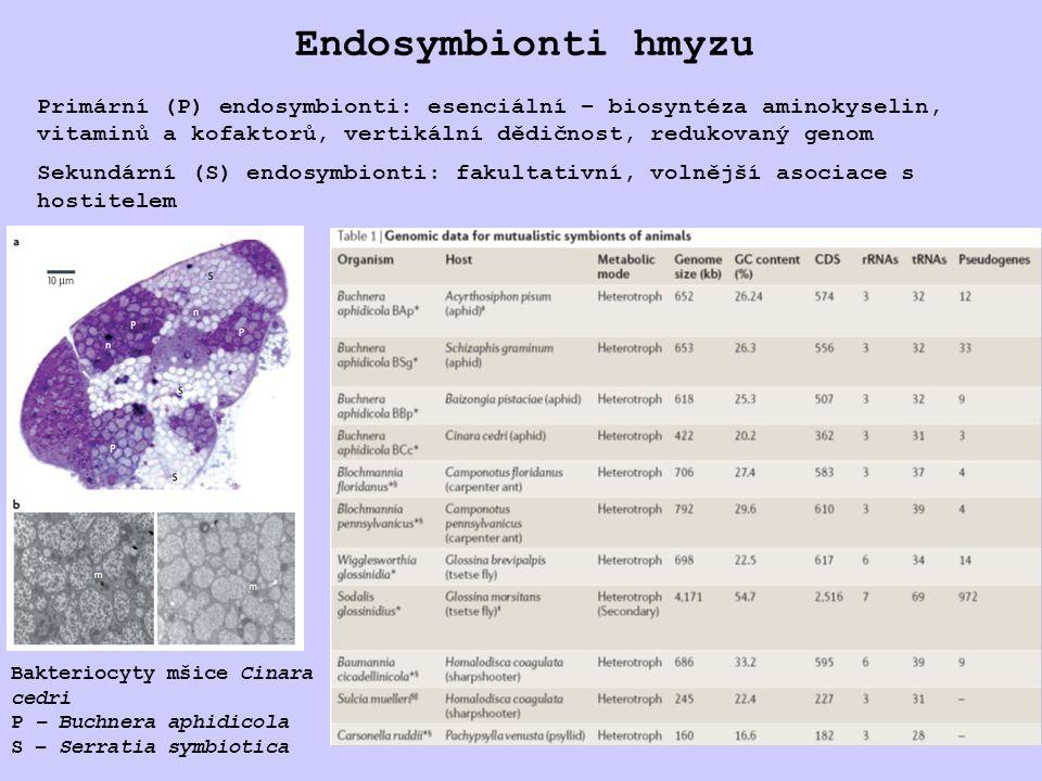 Endosymbionti hmyzu Bakteriocyty mšice Cinara cedri P – Buchnera aphidicola S – Serratia symbiotica Primární (P) endosymbionti: esenciální – biosyntéza aminokyselin, vitaminů a kofaktorů, vertikální dědičnost, redukovaný genom Sekundární (S) endosymbionti: fakultativní, volnější asociace s hostitelem