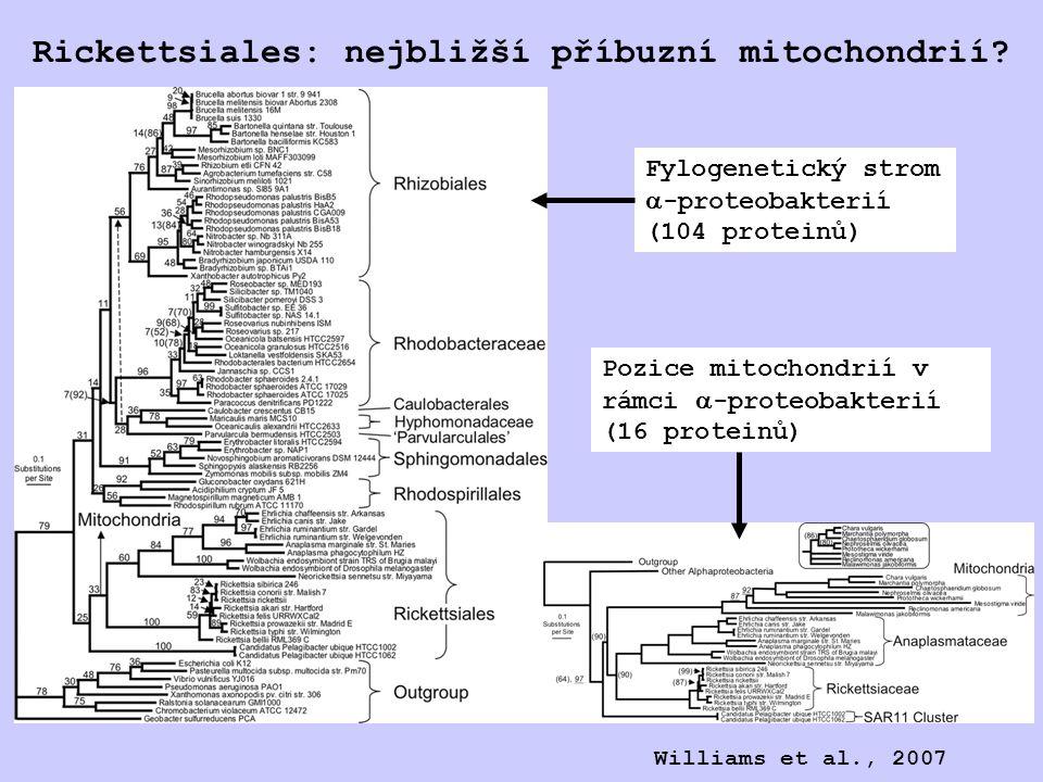 Rickettsiales: nejbližší příbuzní mitochondrií.