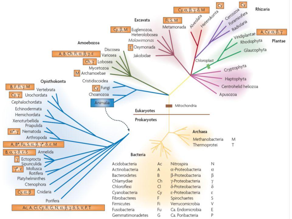  -proteobakteriální původ mitochondrie Kombinované ribosomální proteiny Andersson et al., 1998  +  podjednotka ATPasy Kurland & Andersson, 2000